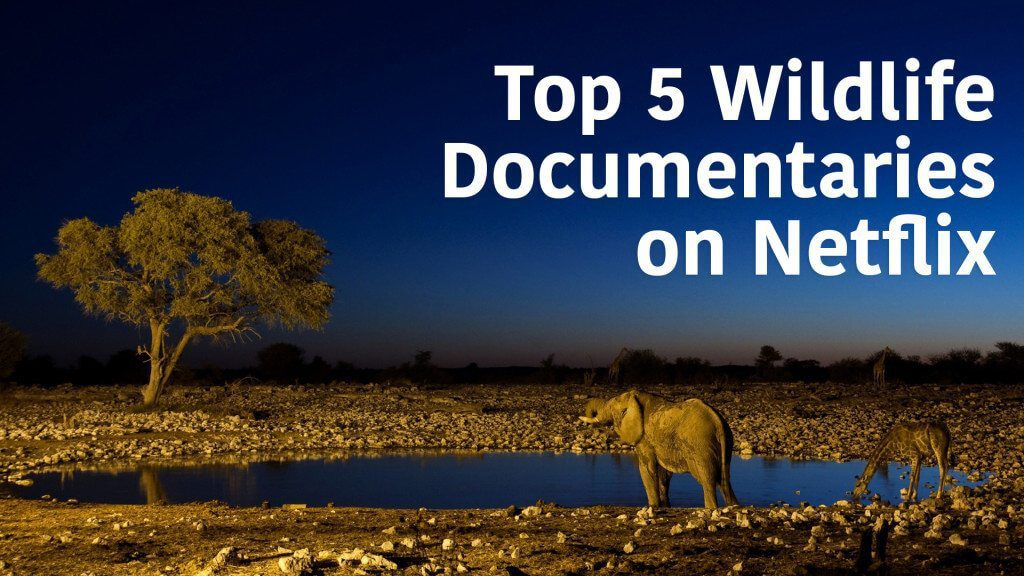 top-wildlife-docs-on-netflix