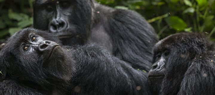 virunga-netflix-original