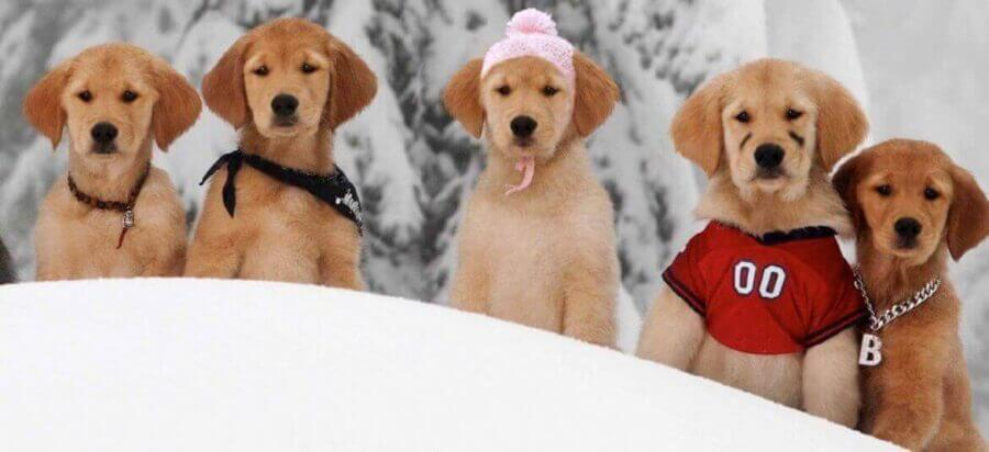 snow-buddies