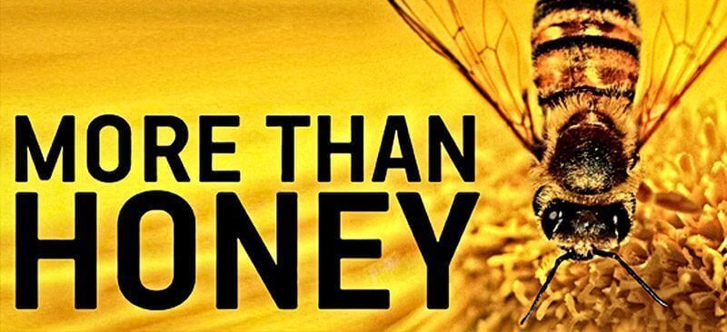 more than honey netflix