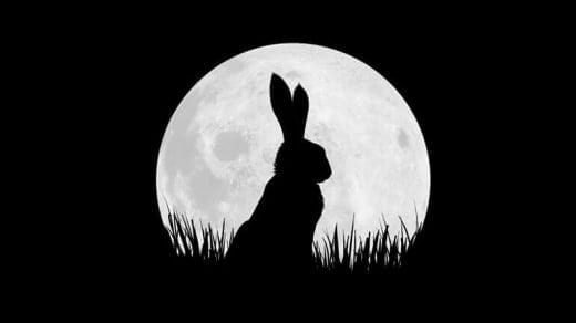 bbc co production watership down