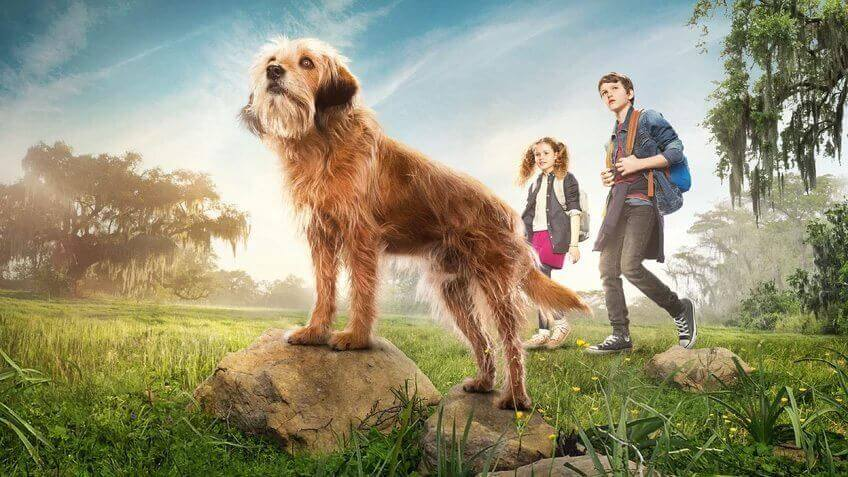 cae5b9a21d16 Netflix s reboot of Benji is finally out in the wild and we ve got  everything you need to know after watching the new version of the family  classic.