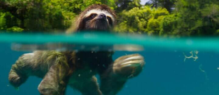 Best Nature Documentaries on Netflix in 2019 - What's on Netflix