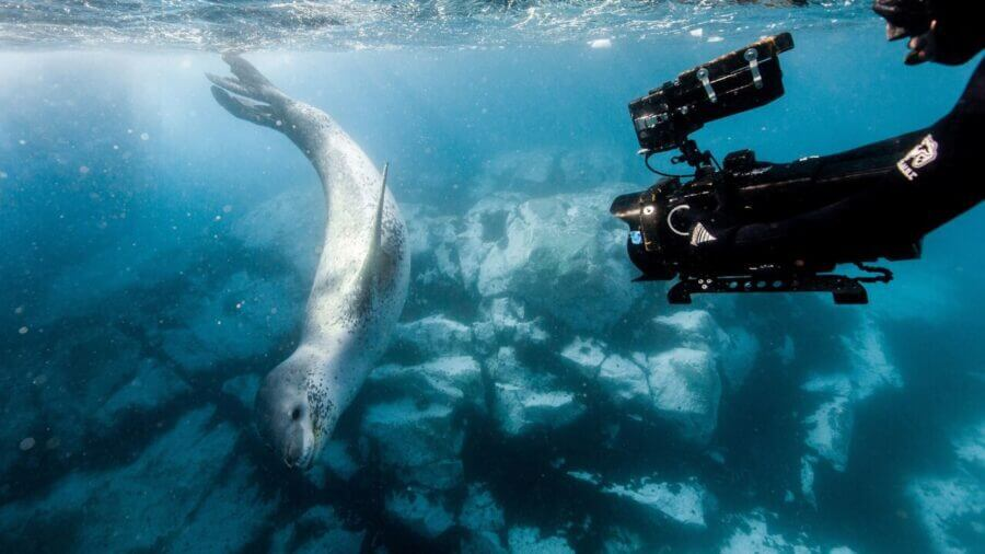Our Planet Netflix Silverback Films