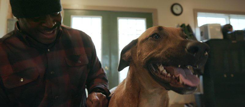 dogs season 2 july 2021