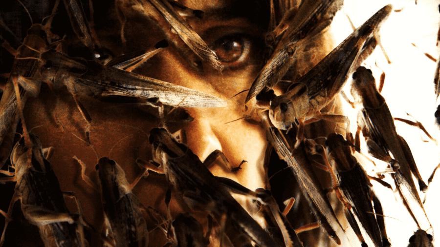 french horror the swarm netflix