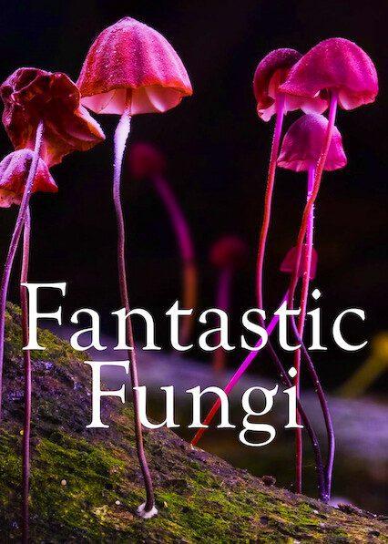 Fantastic Fungi on Netflix